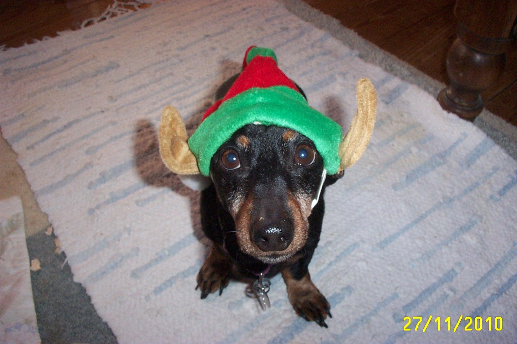 Pele with elf hat
